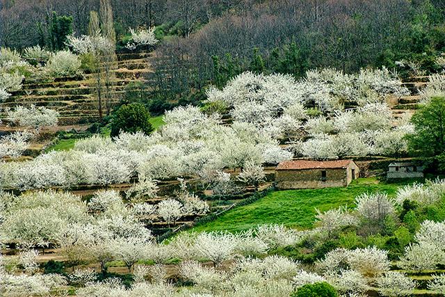 Valle del Jerte_3