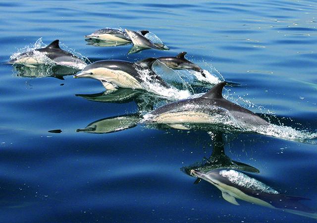 Delfin-Sichtung_Gibraltar2