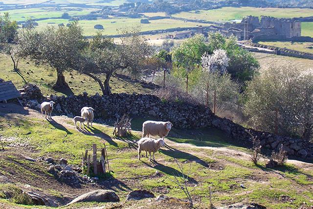 Extremadura_Ovejas