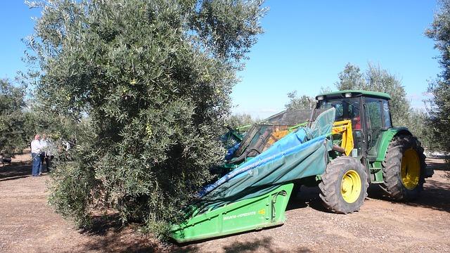 olive-332665_640