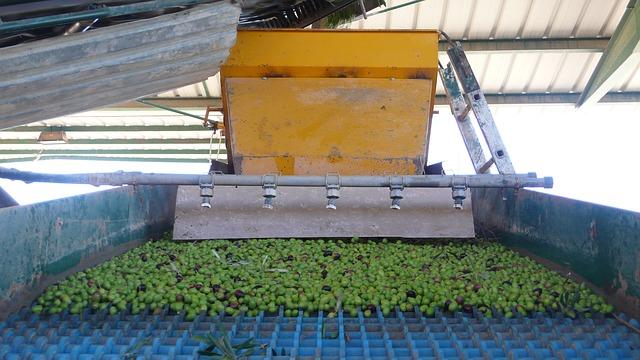 olives-332336_640