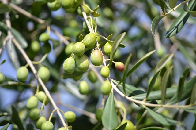 olives-886881_640