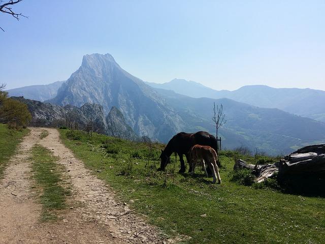 mountains-2431242_640